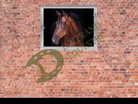 Dessin d'un cheval derrière sa fenêtre de box modèle Vénus