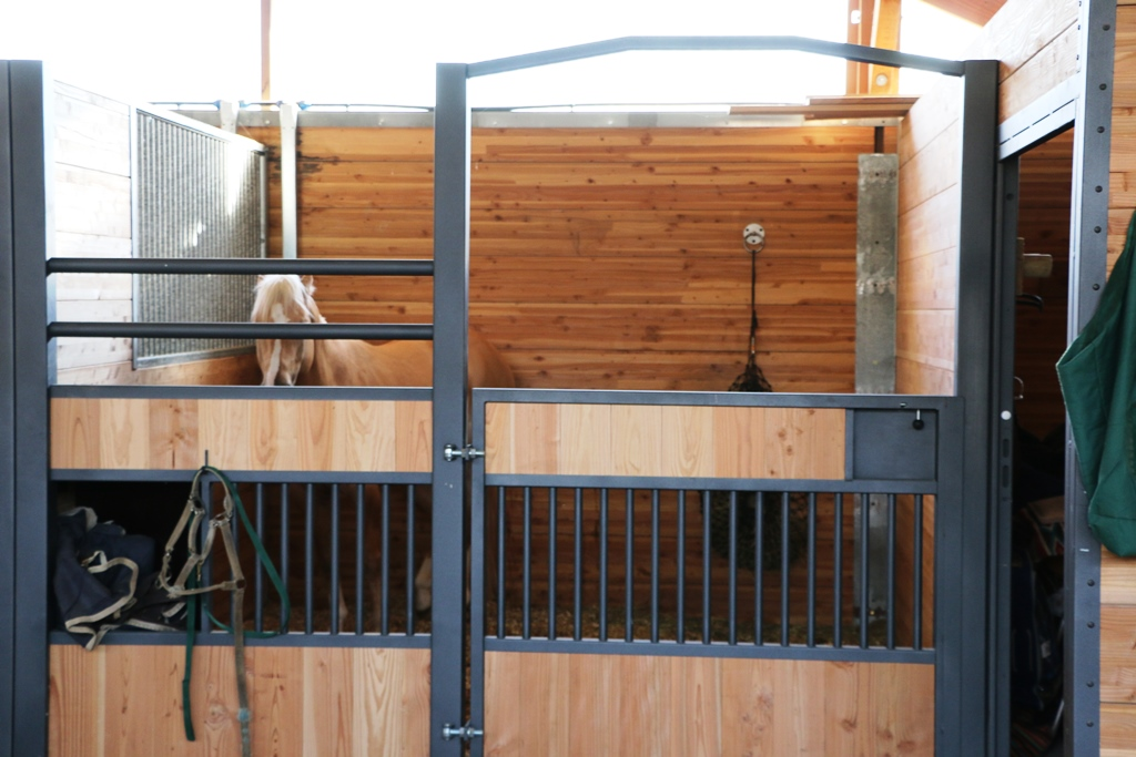 Closed GS stall door with a pony inside