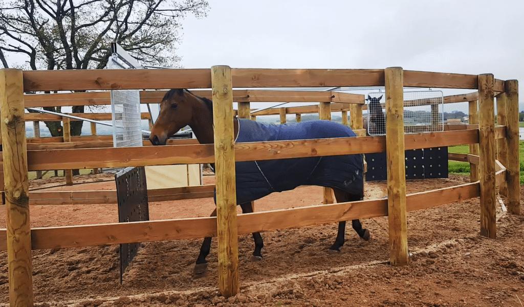 Cheval qui marche dans un marcheur pour chevaux
