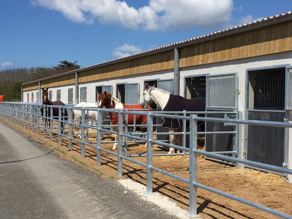 Chevaux sortis dans des paddocks terrasses fabriqués par Doitrand Equestre