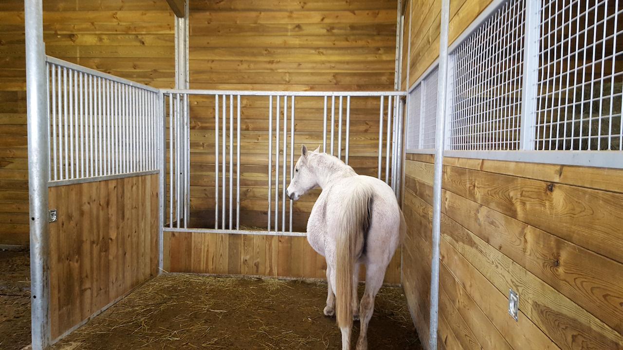 Cheval dans barns avec une façade stabulation pour le foin