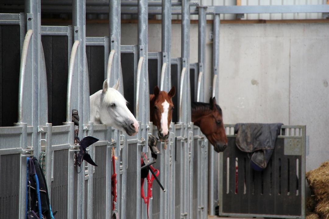 Boxes intérieurs pour chevaux