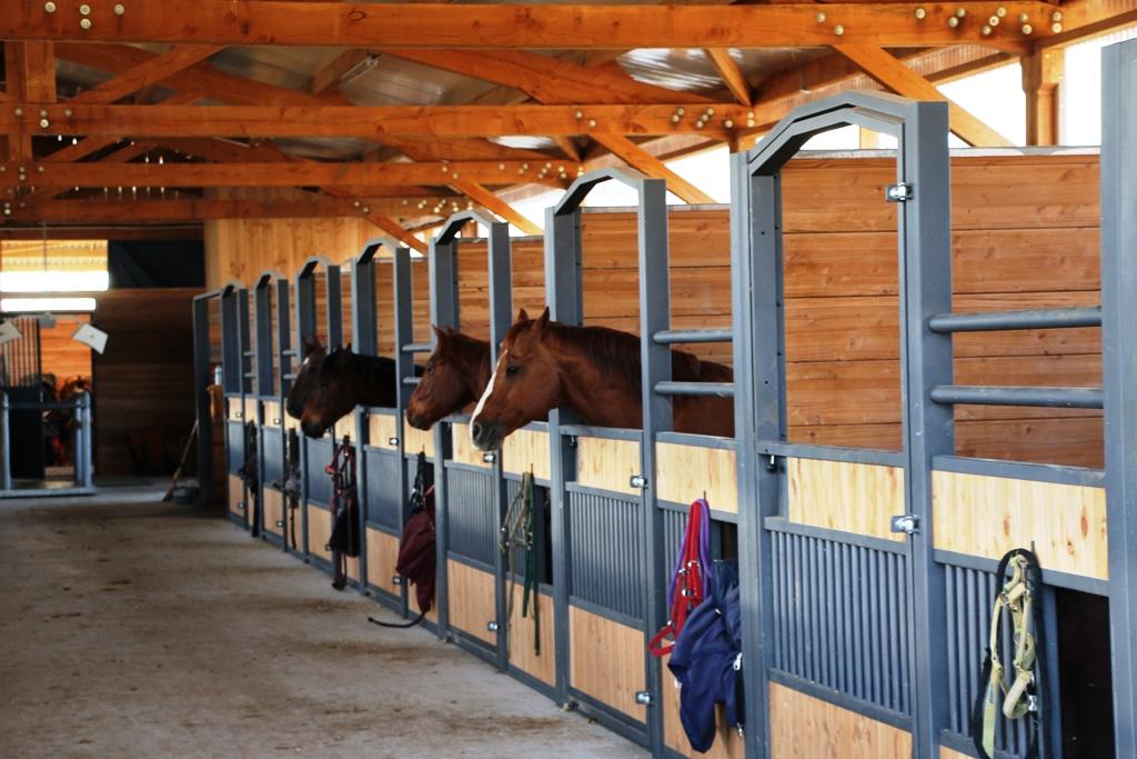 Façade de box Doitrand Equestre GS dans une écurie avec des chevaux