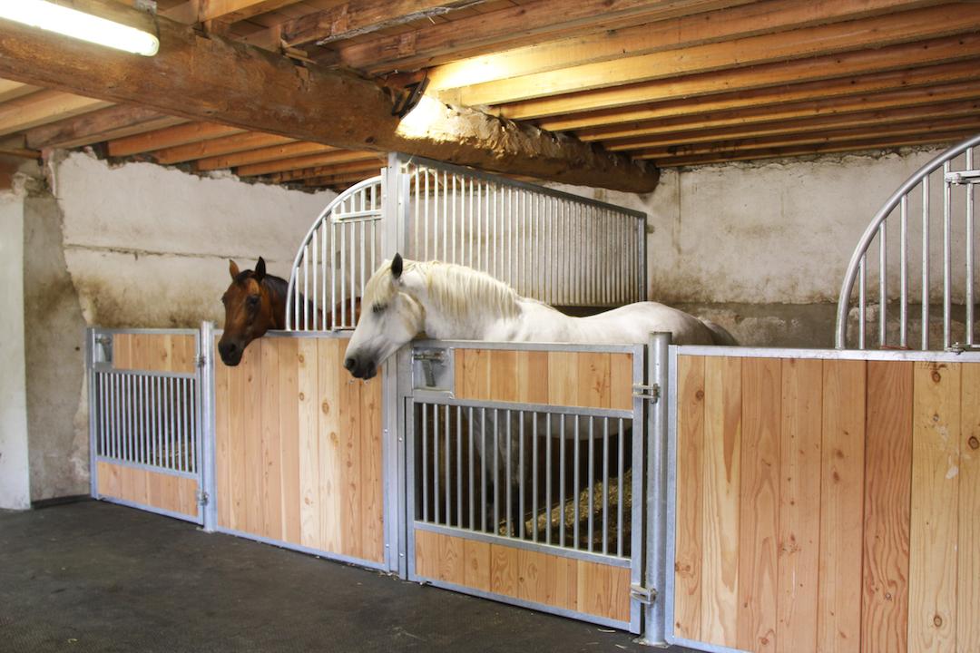 2 chevaux dans leurs boxes modèles Quarter