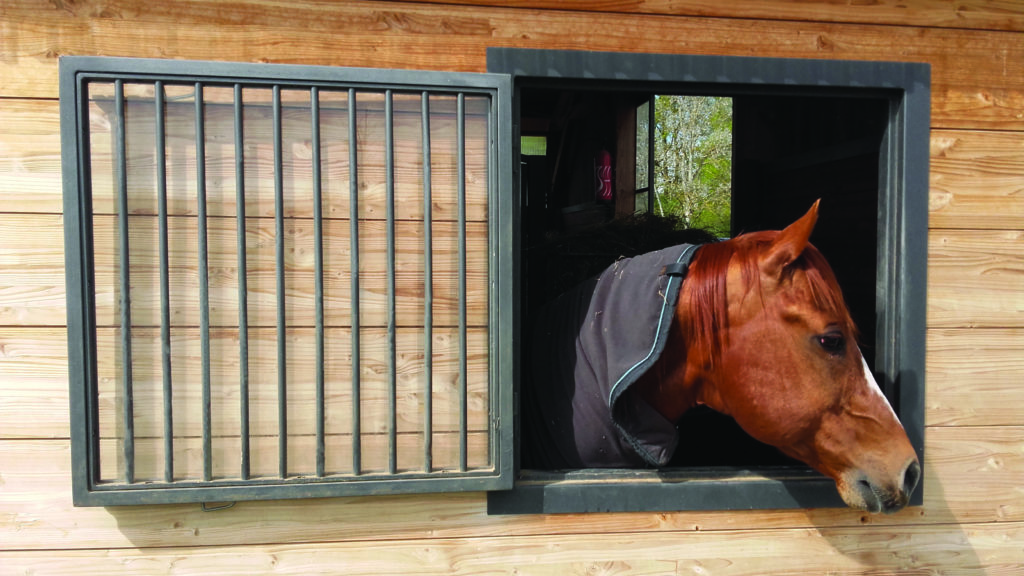 Cheval qui sort sa tête par une fenêtre de box