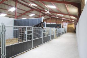 Cheval dans un box élevage