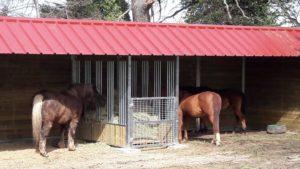 Chevaux qui mangent dans un abri râtelier